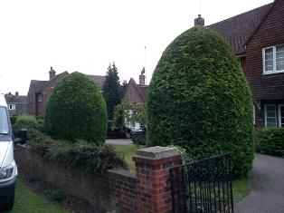 Hedge cutting and trimming services